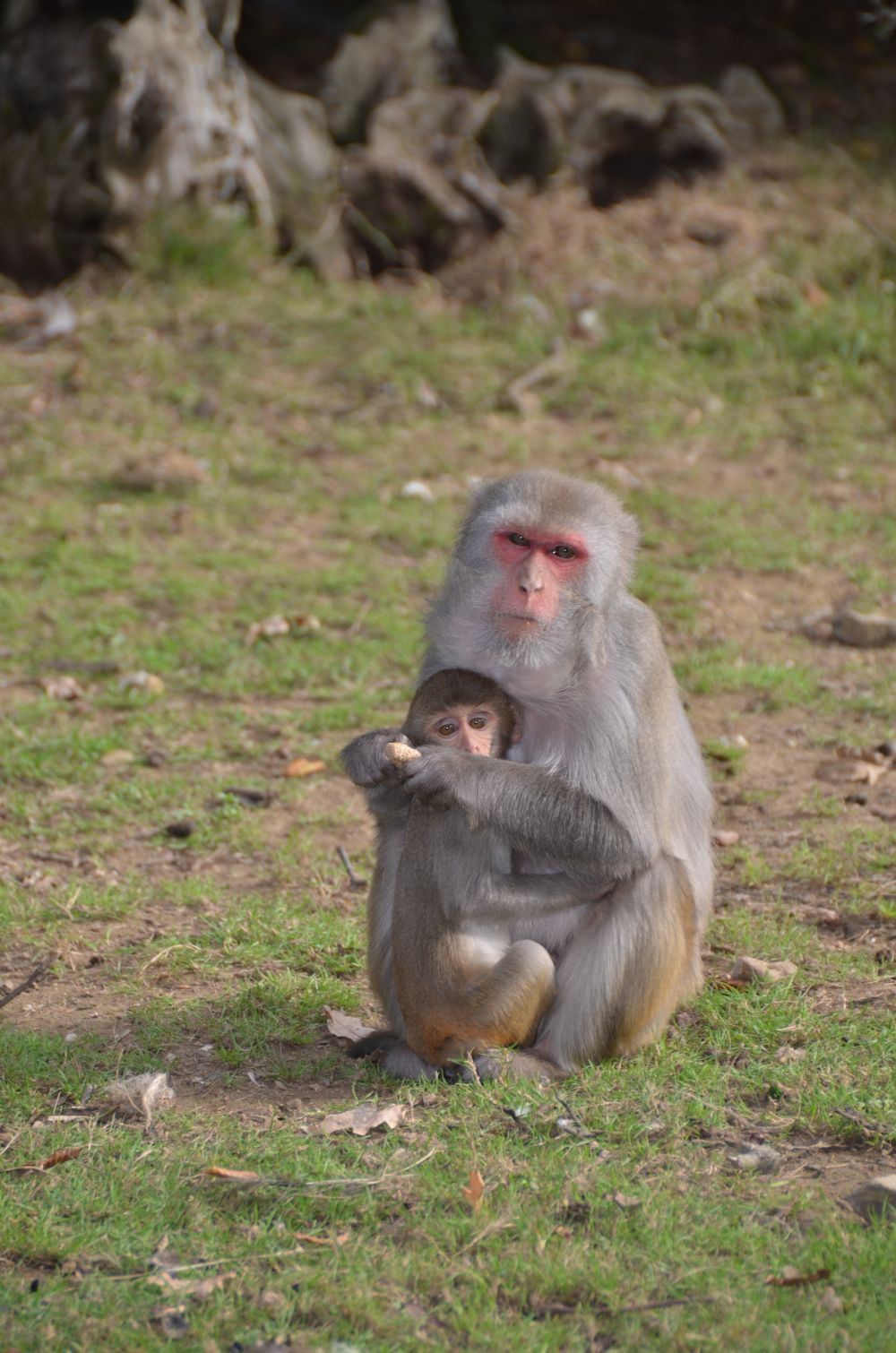 Rhesus macaque baby and mum; photo credit One Voice