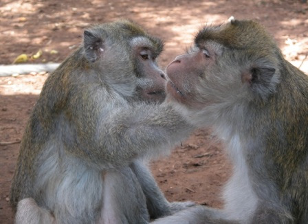 Long-tailed macaques, photo by Sarah Kite